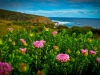 The Cape to Cape Wildflowers are Back!