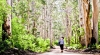 Walk the Karri Forrest