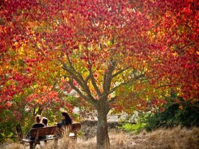 Golden Valley Tree Park in Balingup