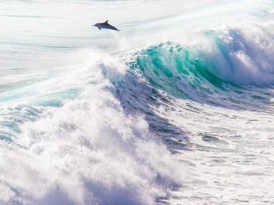Margaret River dolphin